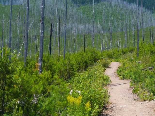 Burnt-out section of the trail.