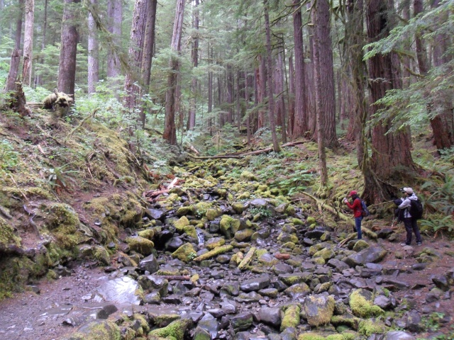 Heading toward Sol Duc Falls